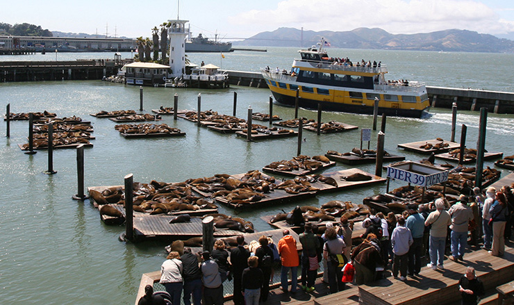 Pier 39 sea lions, San Francisco Family Attractions