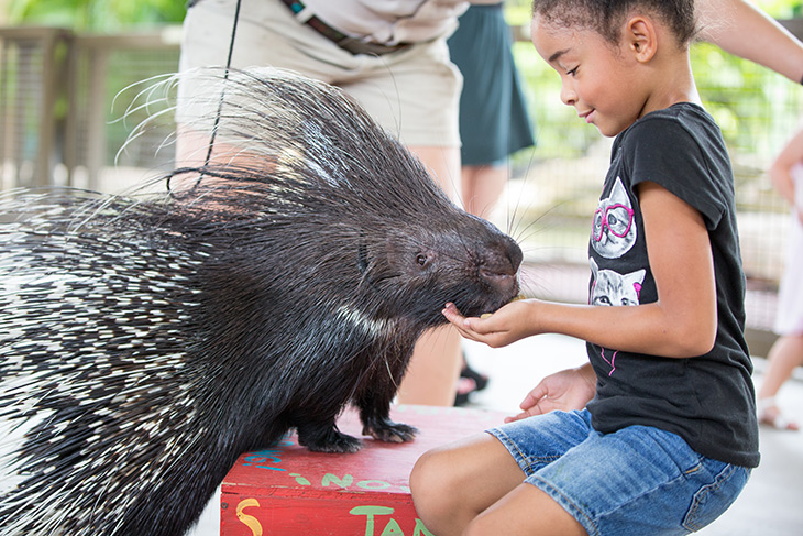 Porcupine at Jungle Island, Miami Family Attractions