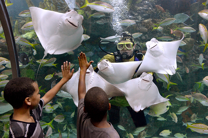 Aquarium of the Americas, New Orleans family attractions