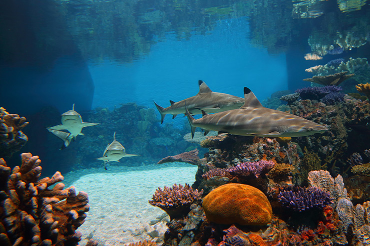 National Aquarium shark tank