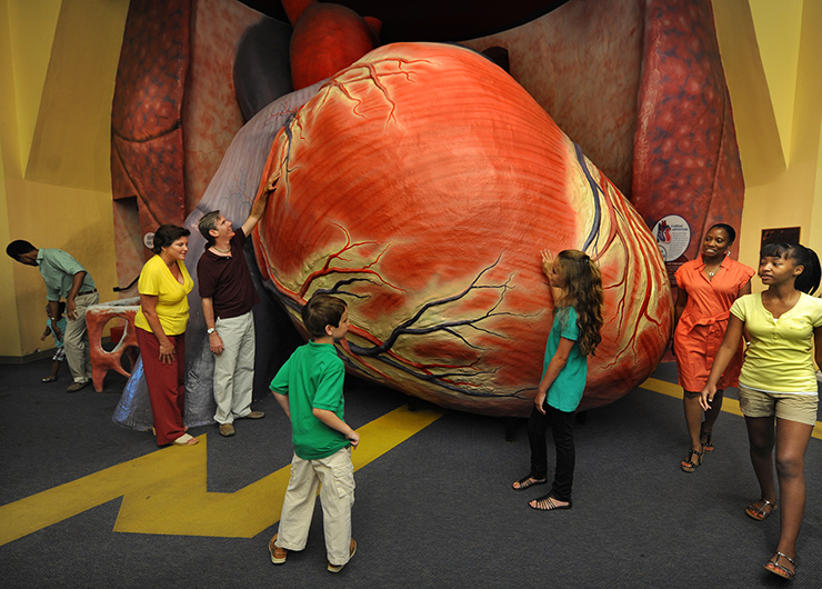 Giant heart at Franklin Institute, Philadelphia Family Attractions