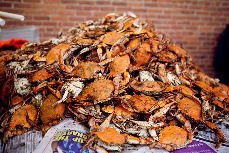 Mountain of steamed Crabs, Annapolis Events