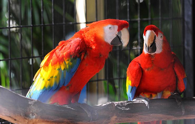 Macaws at Baton Rouge Zoo