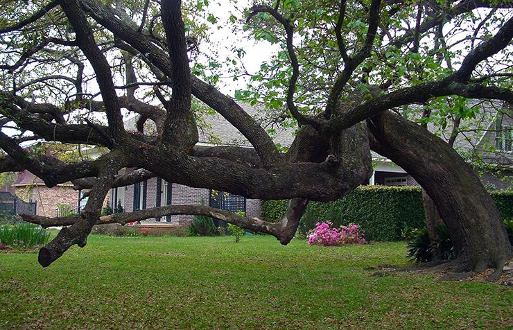 Bent oak tree where slaves met, Mobile History