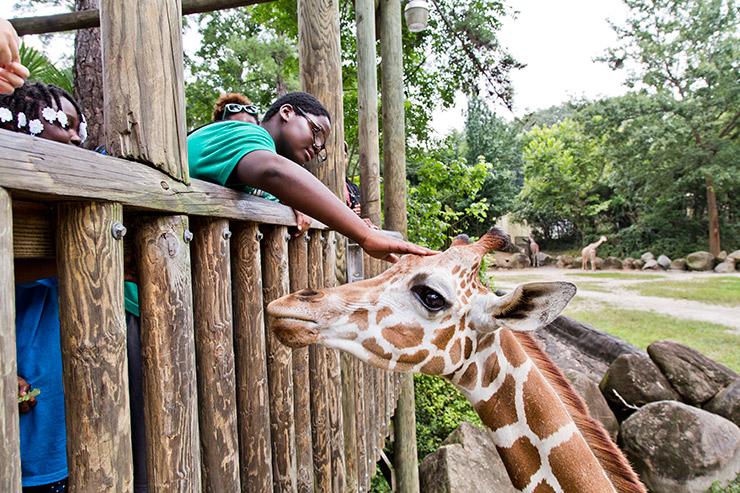 Petting a giraffe at Riverbanks Zoo