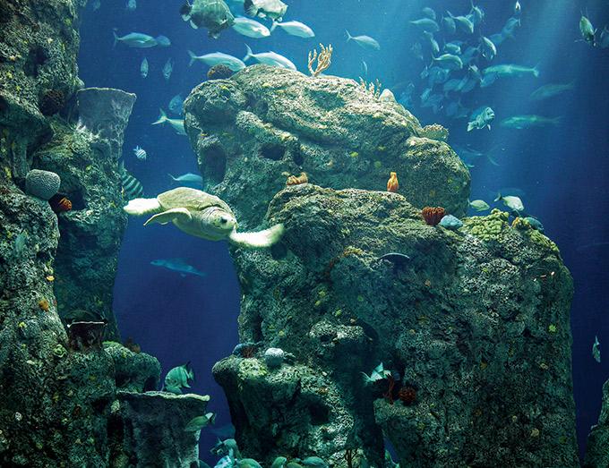 South Carolina Aquarium, Charleston Family Attractions