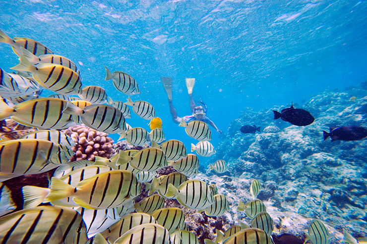 Snorkeling among tropical fish off Maui