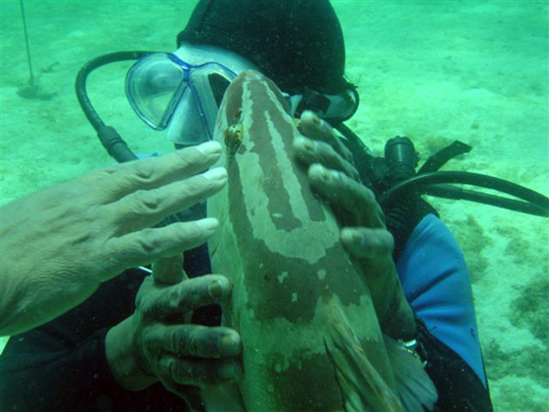 Diver touching a grouper fish; (c) Soul Of America