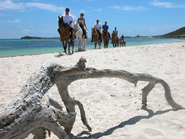 Horseback riding along the beach of St. Maarten Eco-Travel