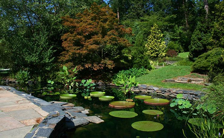 Lily pond in Sara Duke Garden, Durham General Attractions