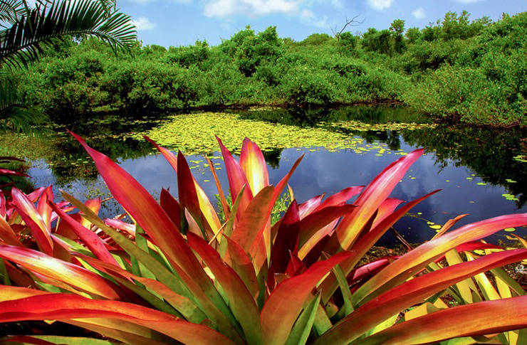 Queen Elizabeth Botanic Park, Grand Cayman Eco-Travel