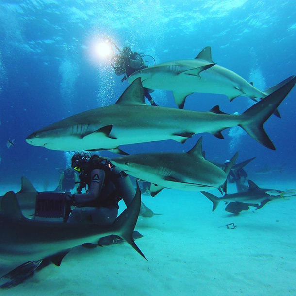 Swim with Sharks off Nassau