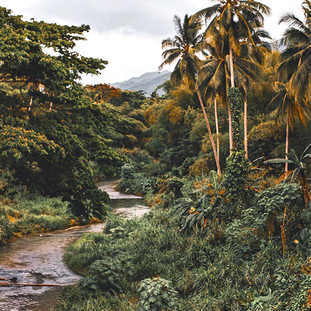 River rainforest, Montego Bay Eco-Travel