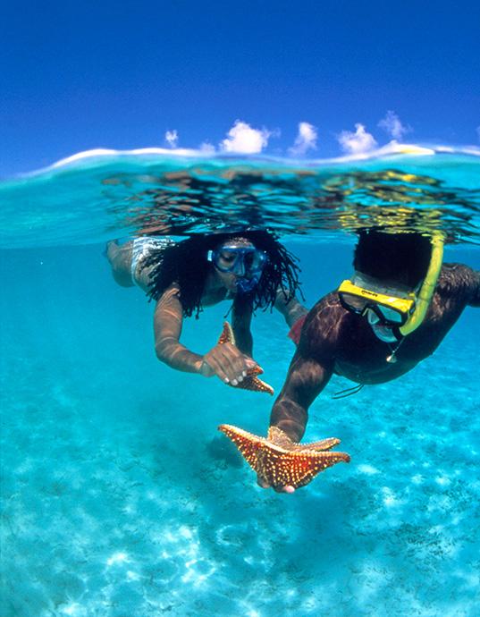 Snorkelers holding starfish