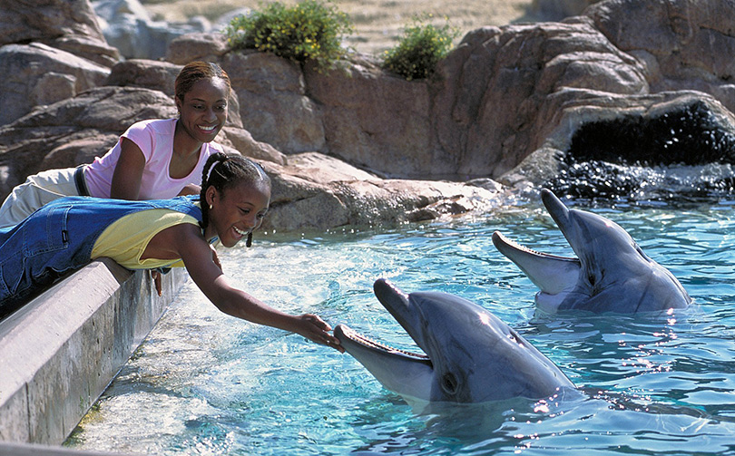 Feed the dolphins at SeaWorld San Diego