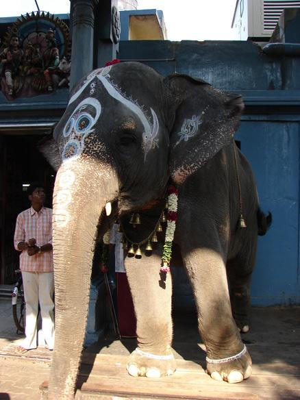 Elephant at Manakkula Vinayagar Koil Temple