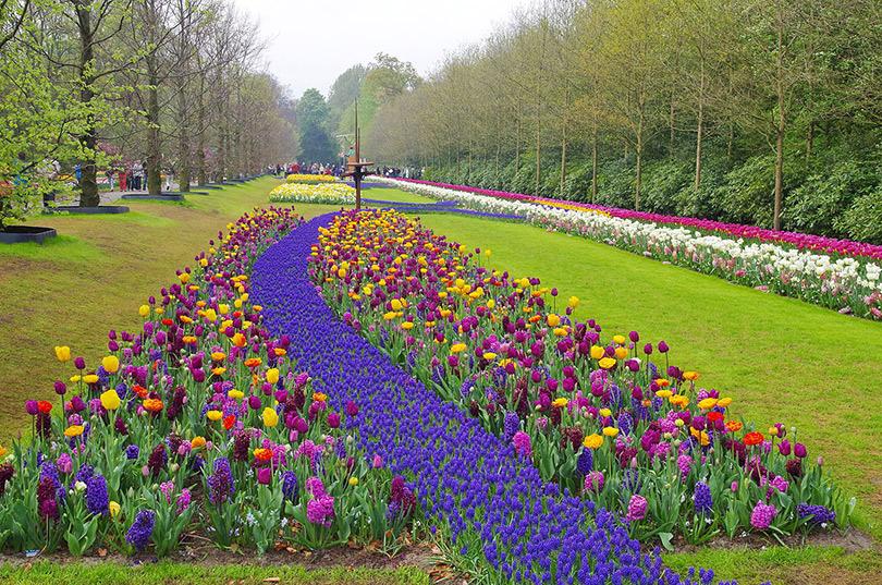 The sheer beauty of Amsterdam Keukenhof Garden